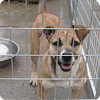Adopt A Pet :: Tiki - South Dennis, MA