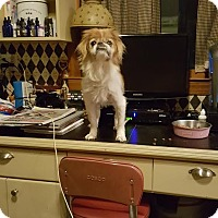 Adopt A Pet :: Trench - Freeport, NY