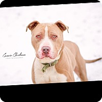 Adopt A Pet :: Hoss - ADOPTED! - Zanesville, OH