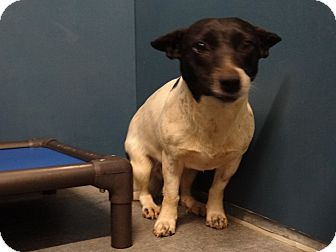 Terrier (Unknown Type, Medium) Mix Dog for adoption in Henderson, North Carolina - Sarah (HW Neg)