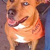 Adopt A Pet :: Bloo - Cerritos, CA