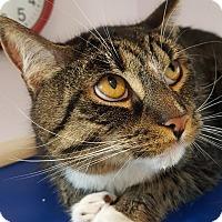 Adopt A Pet :: Mowgli - Salisbury, MA