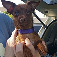 Adopt A Pet :: Baker - DAYTON, OH