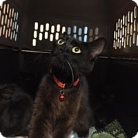 Adopt A Pet :: Patsy Cline - Gulfport, MS