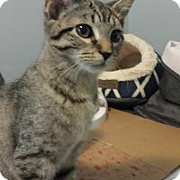 Adopt A Pet :: Sansa - Fishers, IN