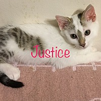 Adopt A Pet :: Justice - Covington, KY