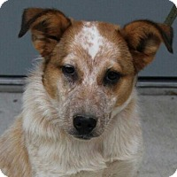 Adopt A Pet :: Kayla - Hagerstown, MD