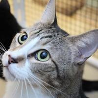 Adopt A Pet :: Pepper - Morgan Hill, CA