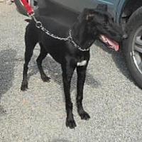Adopt A Pet :: Finnengan - Yucaipa, CA