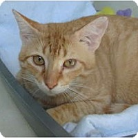 Adopt A Pet :: Harold - Winter Haven, FL
