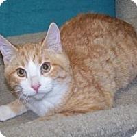Adopt A Pet :: K-Eva2-Art - Colorado Springs, CO