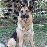 Adopt A Pet :: AXel - Hamilton, MT