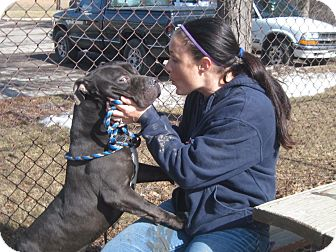 Pit Bull Terrier Mix Dog for adoption in Flint, Michigan - Axel