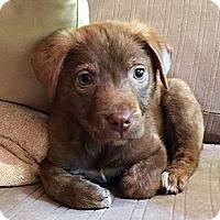 Adopt A Pet :: Carmella - Marietta, GA