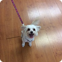 Adopt A Pet :: Sampson - S. Pasedena, FL