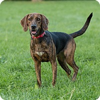 Adopt A Pet :: Sophie - Drumbo, ON