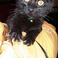 Adopt A Pet :: Froggy - Lancaster, CA