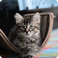 Adopt A Pet :: Oakley - Richmond, VA