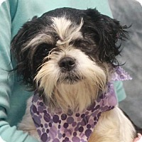 Adopt A Pet :: Diva-PENDING - Garfield Heights, OH