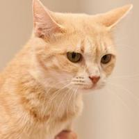 Adopt A Pet :: Gracie - Cartersville, GA