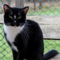 Adopt A Pet :: Brian - Wellsville, NY