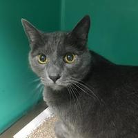 Adopt A Pet :: Scooter - Waldorf, MD