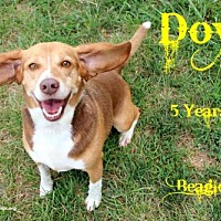 Adopt A Pet :: Doyle - Nicholasville, KY