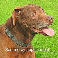 Adopt A Pet :: Trisket - Green Bay, WI