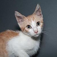 Adopt A Pet :: Lance - Jersey City, NJ