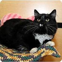 Adopt A Pet :: Icarus - Farmingdale, NY