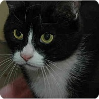 Adopt A Pet :: Junior - Warminster, PA