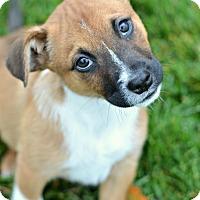 Adopt A Pet :: Oak - Delano, MN