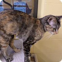 Adopt A Pet :: Goldie Hawn - Lake Charles, LA