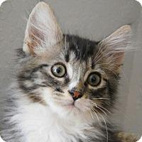 Adopt A Pet :: Chase - Davis, CA