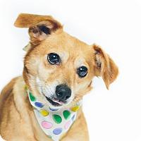 Adopt A Pet :: Cecilia - New Castle, PA