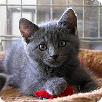 Adopt A Pet :: Ally - Sherman Oaks, CA
