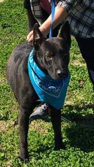 German Shepherd Dog Mix Dog for adoption in Savannah, Tennessee - Radar