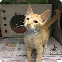 Adopt A Pet :: TALLIE - San Antonio, TX