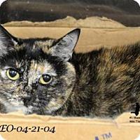 Adopt A Pet :: Octavia - In a Foster Home - Jefferson, LA