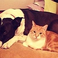 Adopt A Pet :: Sunny - North Highlands, CA