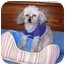 Photo 2 - Poodle (Toy or Tea Cup) Mix Dog for adoption in Osseo, Minnesota - Tinker