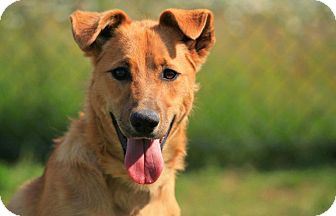 Terrier (Unknown Type, Medium) Mix Dog for adoption in SYDNEY, Nova Scotia - Titus