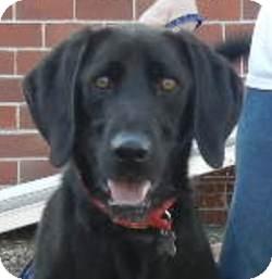 Labrador Retriever Mix Dog for adoption in Des Moines, Iowa - Lucky