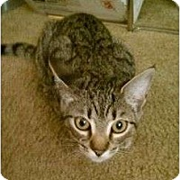Adopt A Pet :: Tillie- New pictures! - Trexlertown, PA