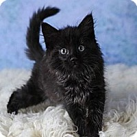 Adopt A Pet :: Barney - Eagan, MN