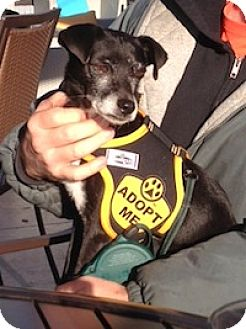 Terrier (Unknown Type, Small) Mix Dog for adoption in Greenville, South Carolina - Titan (Moose)