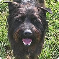 Adopt A Pet :: Coach Kendall - Russellville, KY