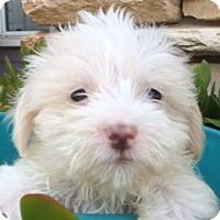 Adopt A Pet :: Coby - La Costa, CA