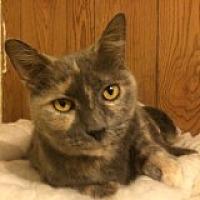 Adopt A Pet :: Dinah - Delmont, PA