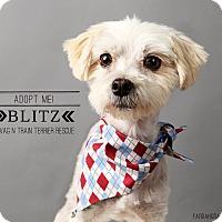 Adopt A Pet :: Blitz-pending adoption - Omaha, NE
